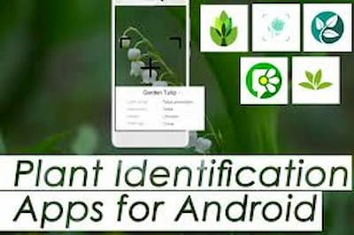 Best Free Plant Identification Apps